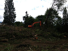 tree falling and land clearing
